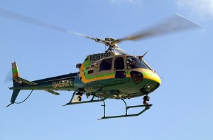 AS350 Green and Gold (500 size)